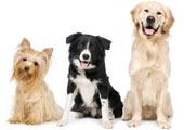 Preços das Raças de Cachorros
